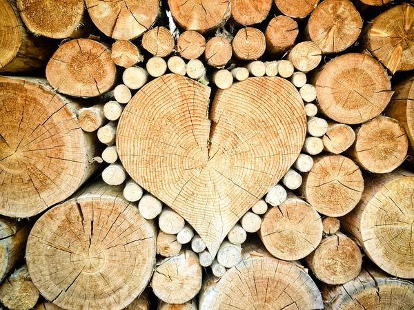 Стихия Дерева. Выращиваем благополучие.